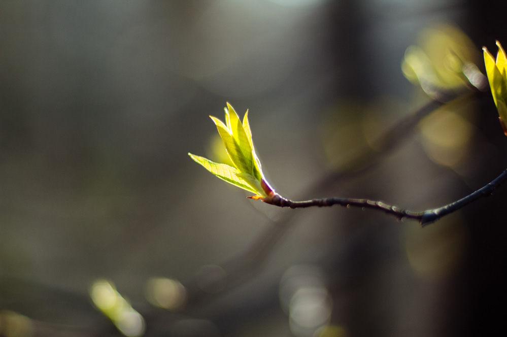 dubna-spring-1.jpg