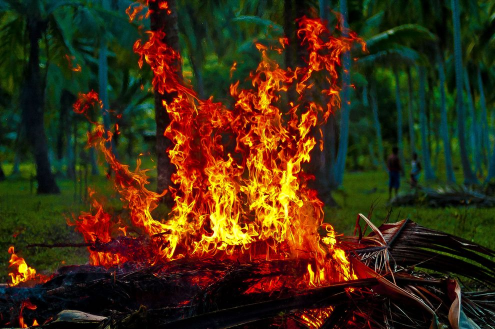 fire-in-the-jungle02.jpg