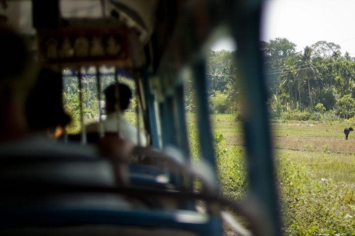 jungle-bus03.jpg
