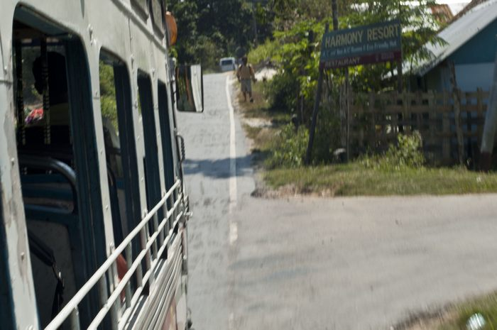 jungle-bus05.jpg