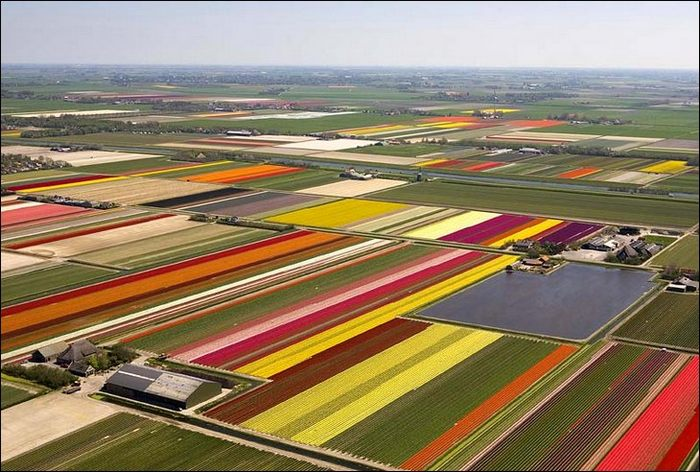 tulip-fields02.jpg