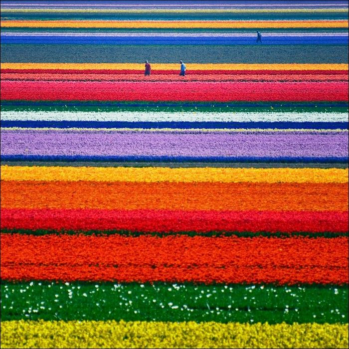 tulip-fields03.jpg