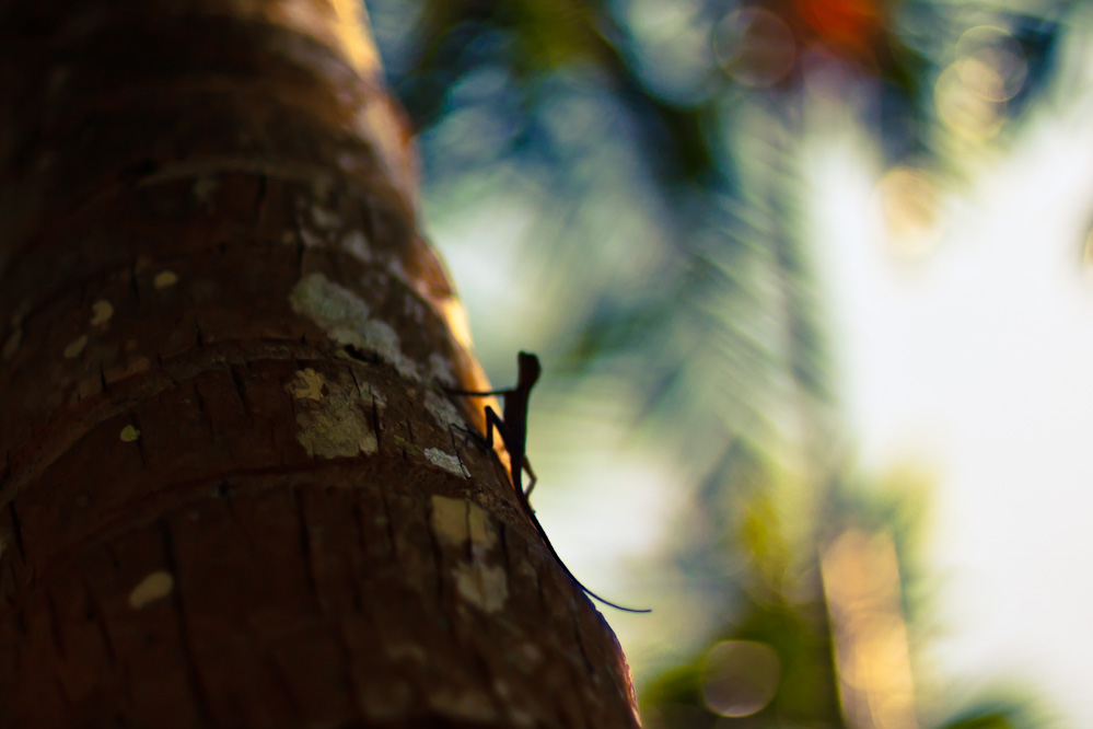 andaman-lizards10.jpg