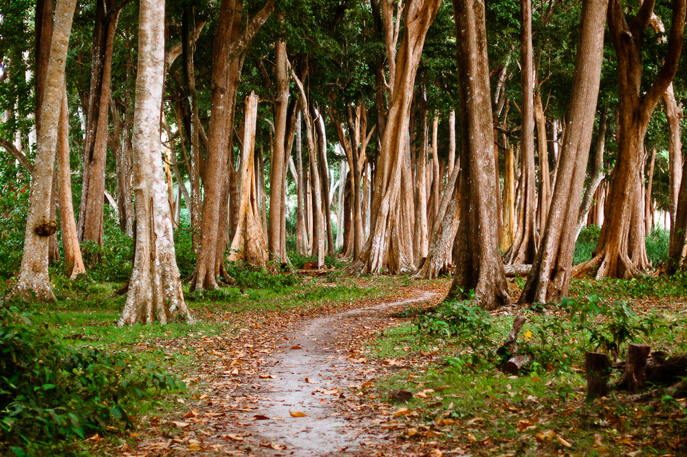 andaman-forest-2.jpg