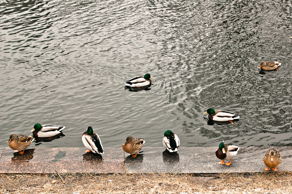 ducks-pattern-1.jpg