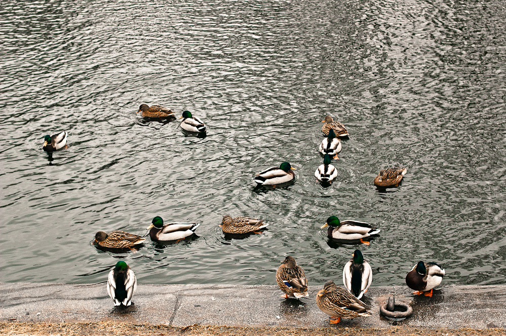 ducks-pattern-2.jpg
