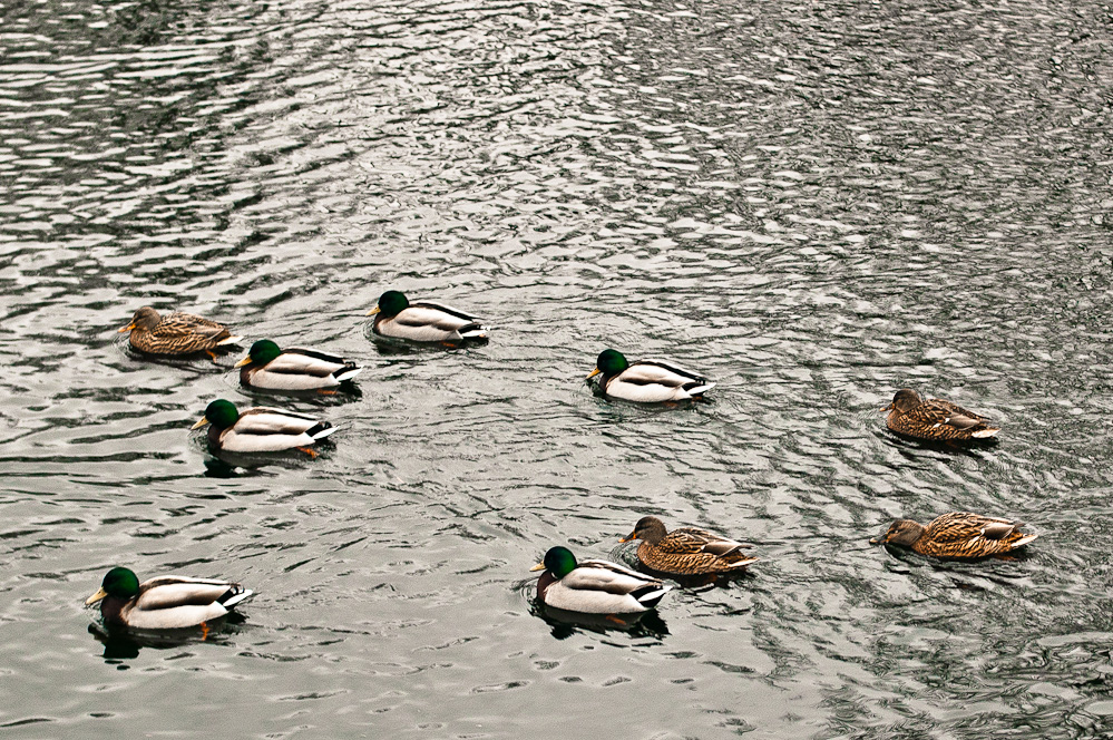 ducks-pattern-3.jpg