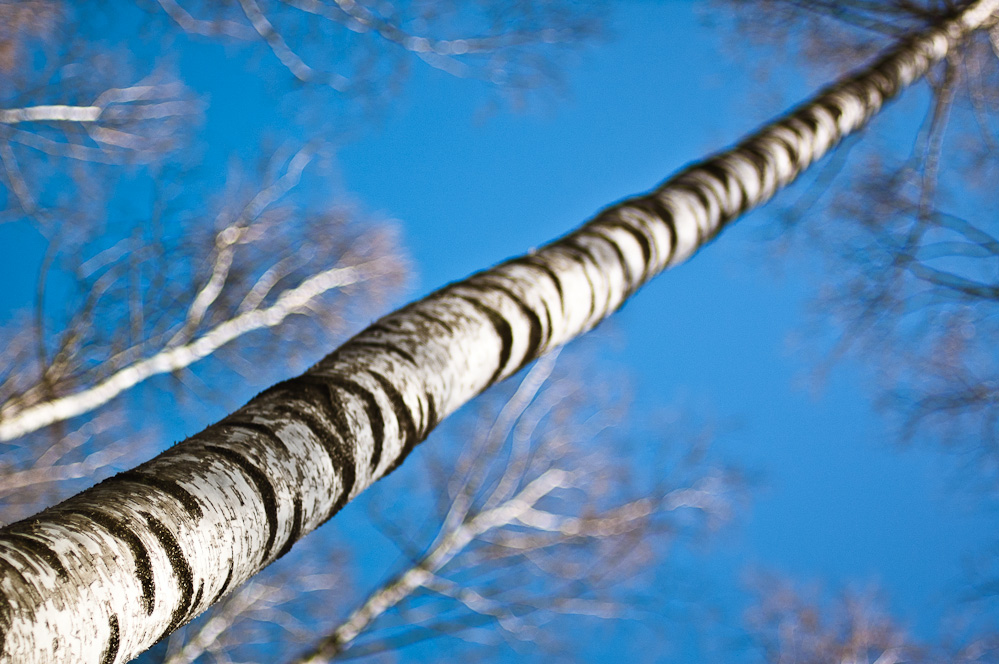birch-allegory-4.jpg