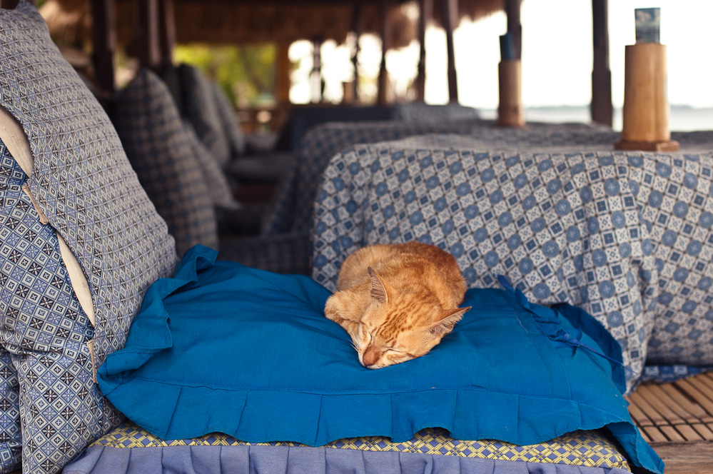 sleeping-cats-4.jpg