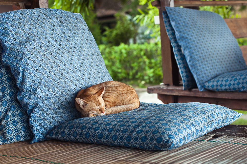 sleeping-cats-5.jpg