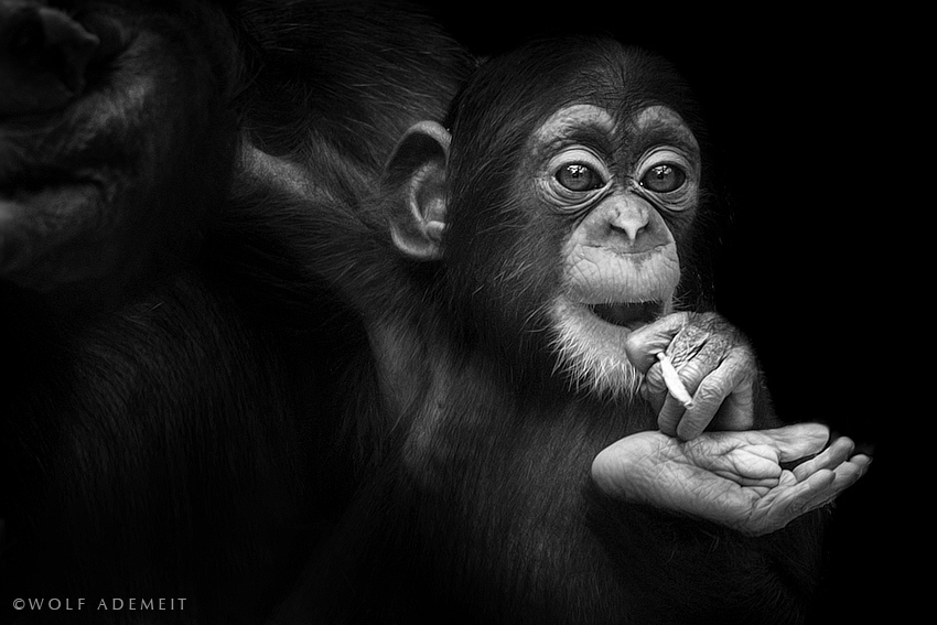 bw-animals-2.jpg