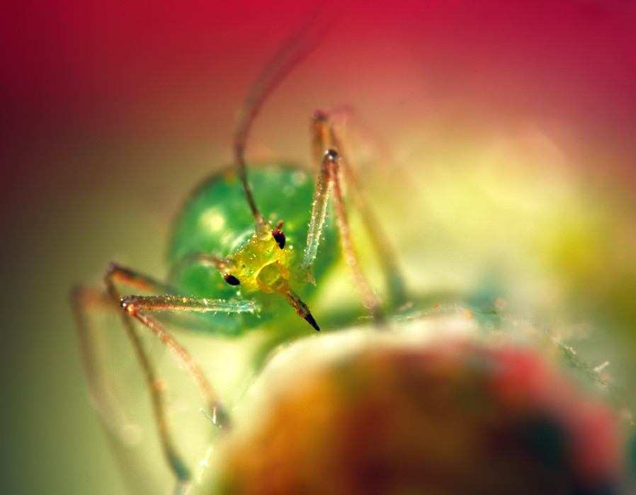 aimish-insects-02