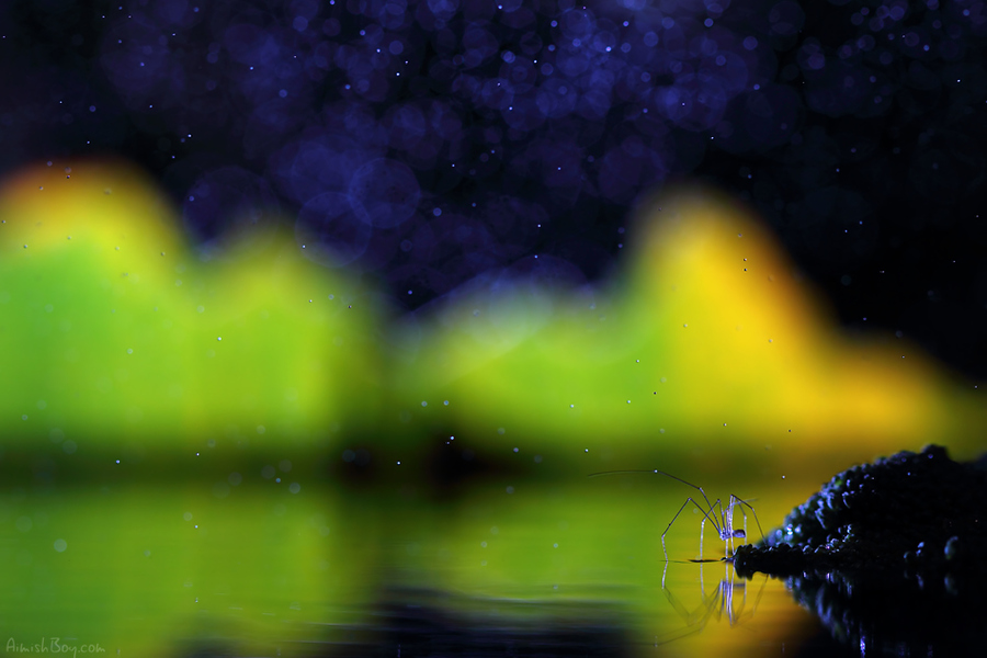 aimish-insects-06