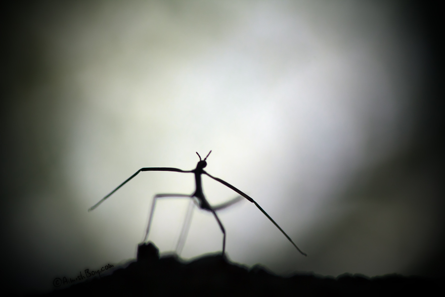 aimish-insects-07
