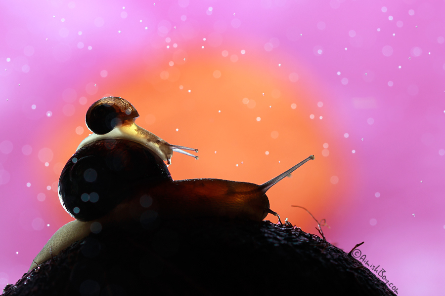 aimish-insects-10