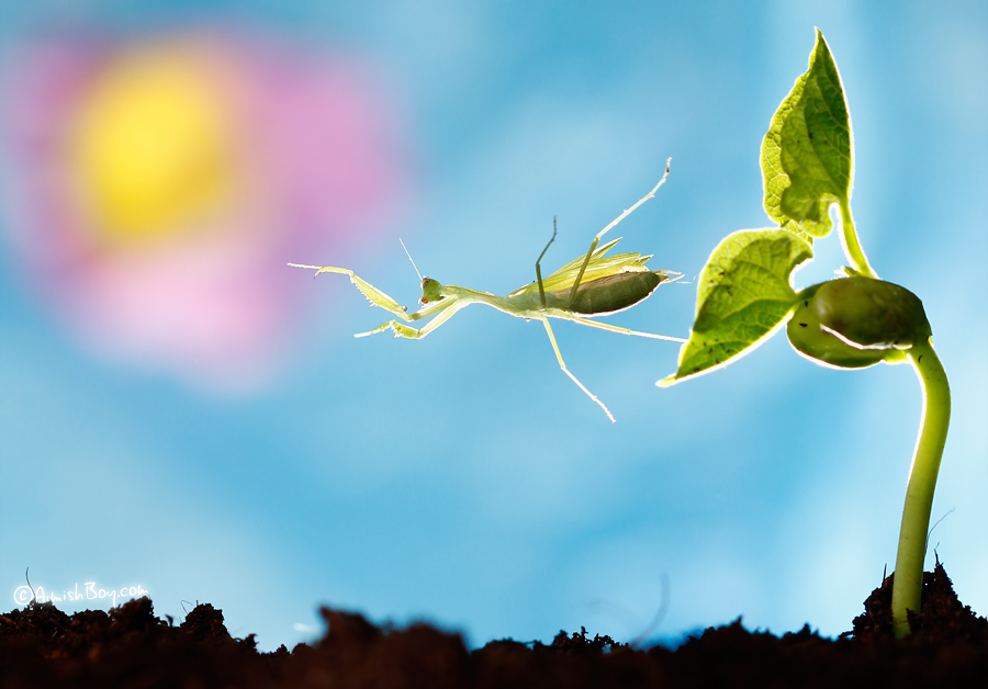 aimish-insects-14