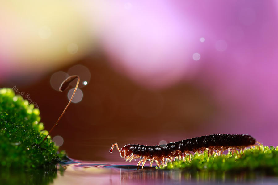 aimish-insects-17