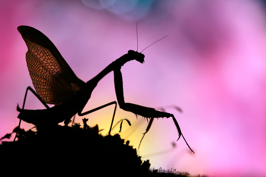 aimish-insects-23