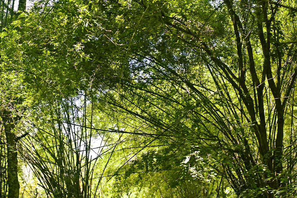 bamboo-cave-1