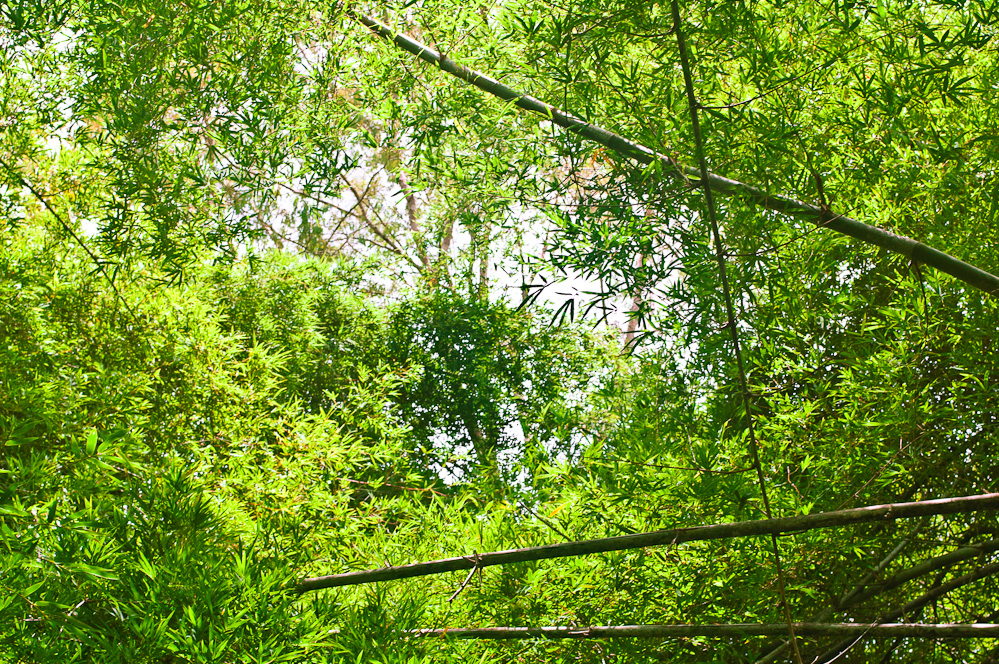 bamboo-cave-14