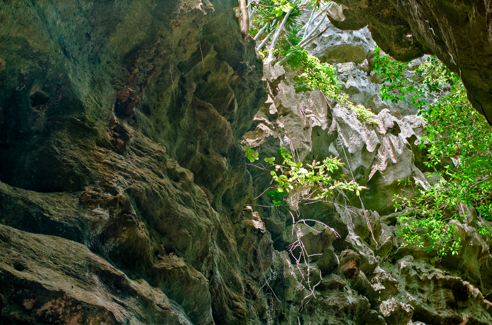 bamboo-cave-9