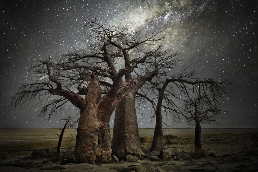 africa-oldest-trees-10.jpg
