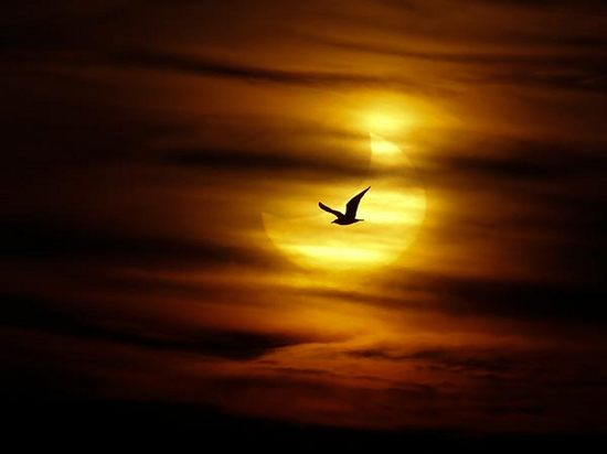 first-partial-solar-eclipse-2011-02.jpg