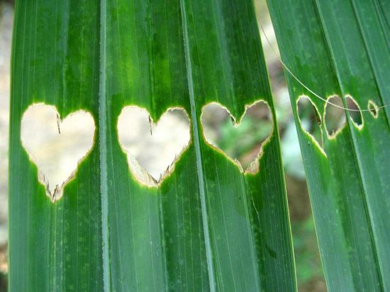 hearts-in-nature06.jpg
