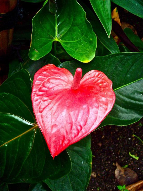 hearts-in-nature21.jpg