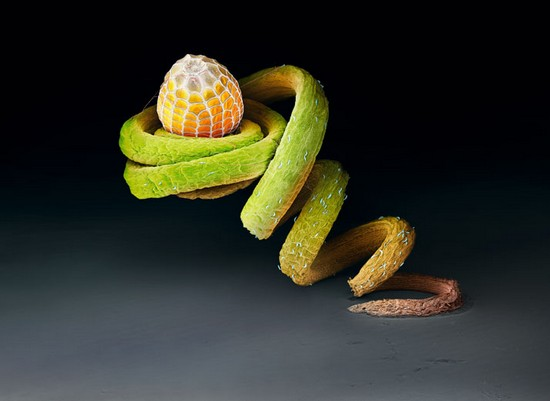 insect-eggs01.jpg