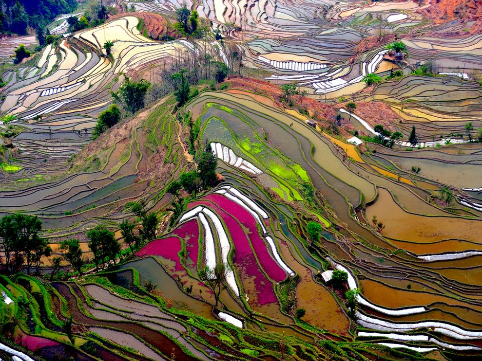 terraced-rice-field-china.jpg