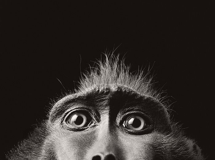 tim-flach-animals02.jpg