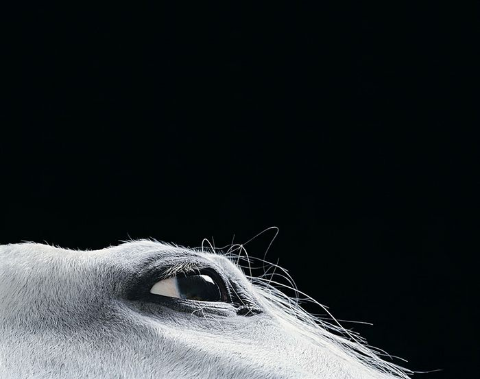 tim-flach-animals05.jpg