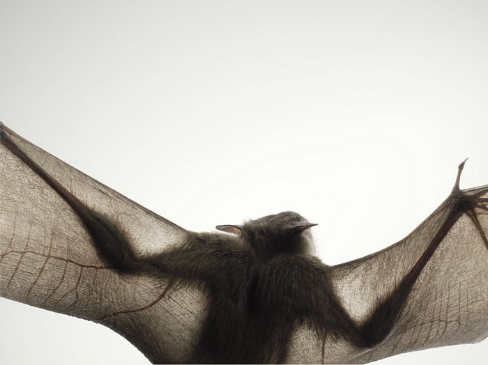 tim-flach-animals10.jpg