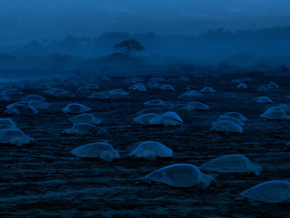 turtles-night.jpg